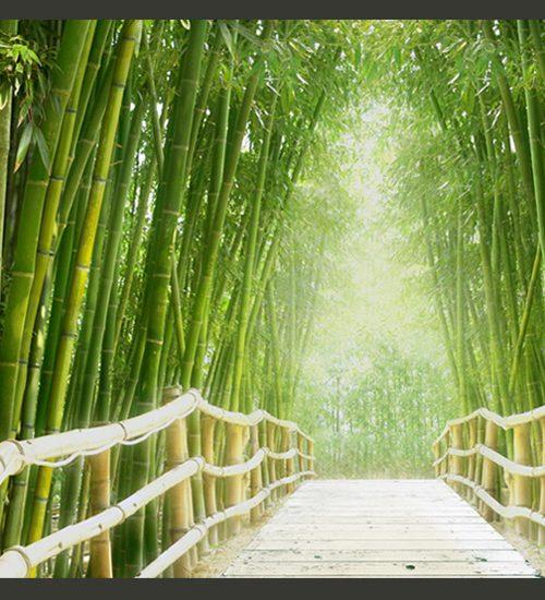 Carta da parati ponte nella foresta di bamb fotomurale for Il verde mondo